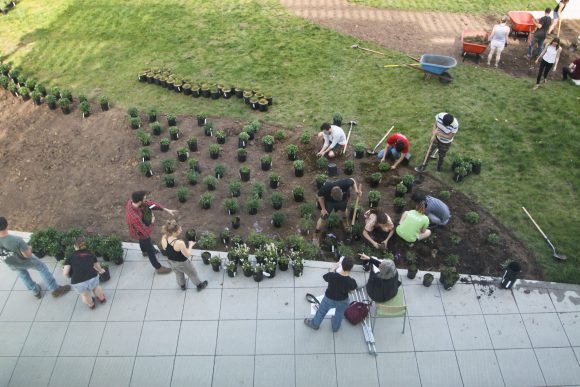 SEBS Students Planting the IFNH Garden.