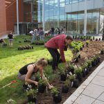 SEBS Students Laying Out Plants for the new IFNH Garden.