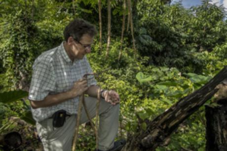Prof. Ilya Raskin holds moringa seeds. Photo courtesy of Ilya Raskin.