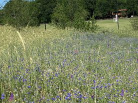Meadow Watch 2 - with wildflowers
