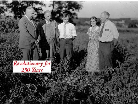 Rutgers Revolutionary Lyman Schermerhorn (left) breeder of the 'Rutgers' tomato in a field of tomatoes (circa 1930s).