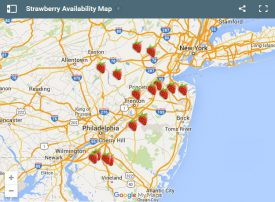 Strawberry Availability Map
