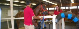 "Rutgers Equine Center Kicks Off ""15 Years Of Excellence"""