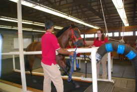 Randy galloping on the hi-speed treadmill assisted by Rutgers students Parth Patel and Kate Goodman.