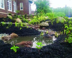 Community rain garden.