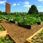 Using Gardens to Improve Community Health and Manage Stormwater Runoff