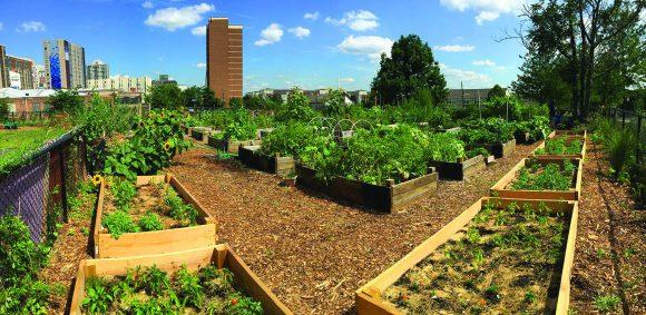 Shiloh Community Garden.