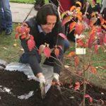 Thomas Molnar Plants Rutgers Scarlet Fire Dogwood Tree in Honor of Rutgers University 250th Anniversary