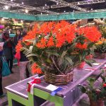 """Rutgers Was All the """"RAGE"""" on the 2017 Flower Show Circuit"""