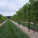 Grape Expectations Wine Symposium Brings Together Both Professional and Amateur Oenophiles and Growers