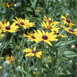 What's in Bloom at the IFNH Meadow?