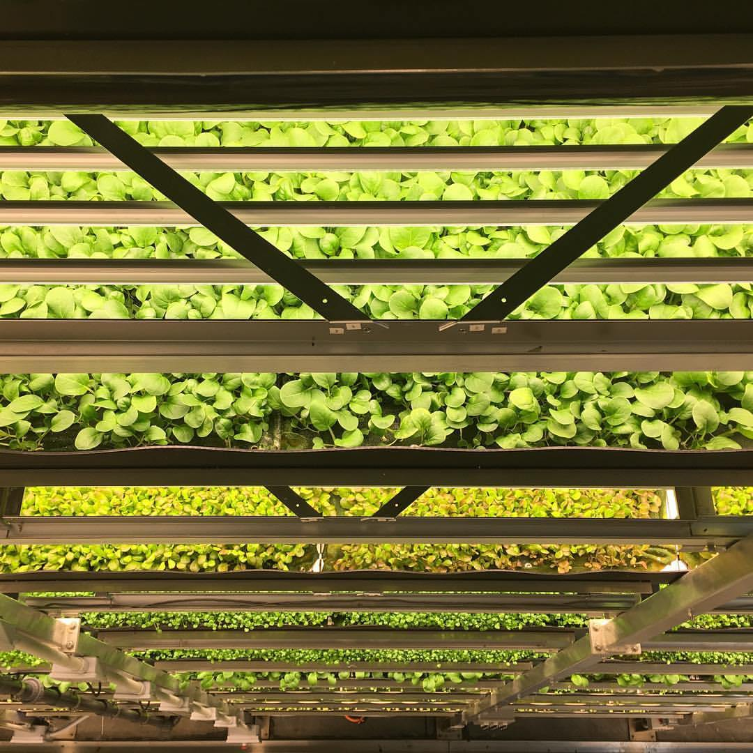 research vertical farming