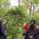 Appalachian Mountain Club's AMC Outdoors Magazine Features Hutcheson Memorial Forest