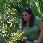 Assistant Prof. Myla Aronson's Urban Plant Research Featured in American Journal of Botany