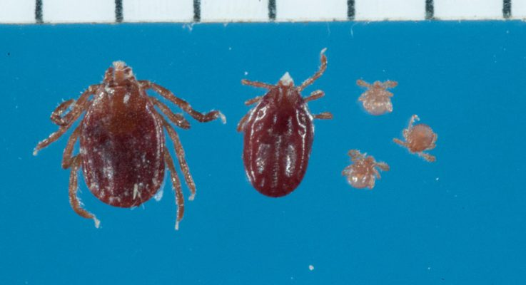 Rutgers Center for Vector Biology Helps in Identification of East Asian Tick Species on Hunterdon County Farm