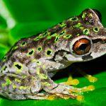 Jonathan Kolby (CC'03): The Frog Prince