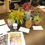 Professor Lena Struwe Launches Botany Depot – a Global Botanical Education Resource