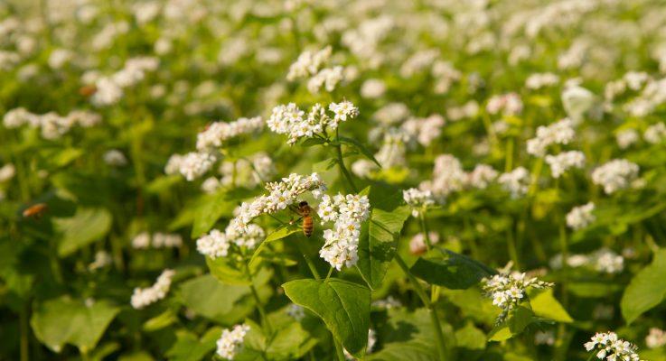 Effectiveness of Crop Pollination by Wild Pollinators Improves with Diversity of Bee Species