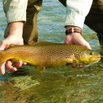 When an invasive species is a recreational fisherman's dream catch