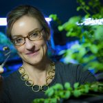 Understanding the Pollinator Population