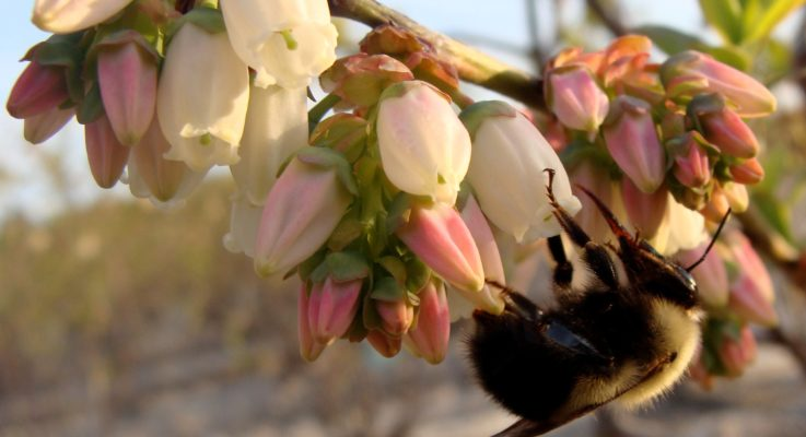 Winfree and her Team Reveal the Importance of Pollinator Biodiversity