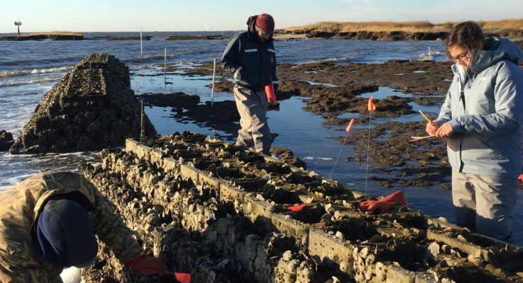Recycled Oyster Shells and 'Oyster Castles' Create Living Shoreline Protection Along Delaware Bay