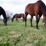 Rutgers 2019 Horse Management Seminar Scheduled for Feb. 10