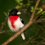 Lockwood Lab Says Protecting Small Forests Fails to Protect Bird Biodiversity
