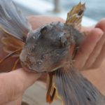 Global Warming Hits Sea Creatures Hardest