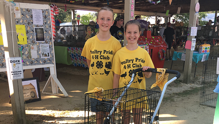 Roses In Garden: Summer Is The Season For 4-H To Shine At County Fairs In
