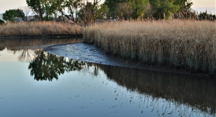 """""""Legacy"""" Mercury Pollution Still a Problem in New Jersey Meadowlands Waters"""