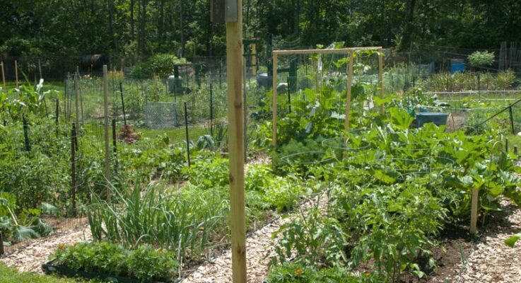 Lunch and Learn Webinars Offered by Rutgers Cooperative Extension as Community Gardens Open