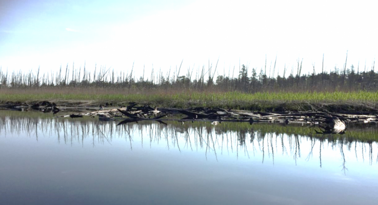 """""""Ghost Forests"""" Expanding Along Northeast U.S. Coast"""