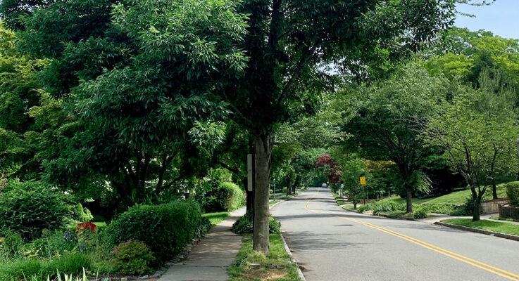 SEBS Student Interns Inform NJ Municipalities on Urban Forestry Program Guidelines
